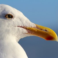 A 'rogue seagull' caused the closure of the Dublin Port Tunnel this afternoon