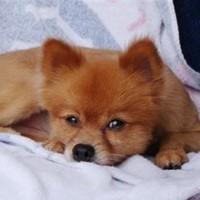 'We beat it 2 death': Cruel note found on tortured dog