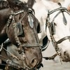Man dies after falling off horse-drawn cart