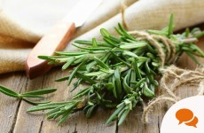 Many of the herbs the high street charge a fortune for are sitting, free, under our very noses