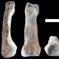 The oldest 'modern' hand in the world has been discovered
