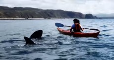 Watch: Huge basking sharks get up close and personal with Malin Head canoeists