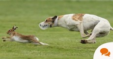 Ongoing legality of wild hare coursing sums up this government's contempt for our natural heritage