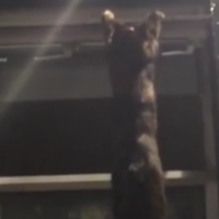 This video of tipsy Wexford pub-goers trying to save a cat from falling is priceless