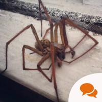 Here's what you need to know about those huge spiders in your house