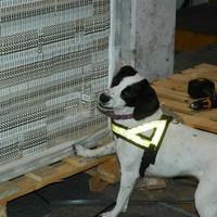 Clever customs dog finds 8 million cigarettes hidden in window frames