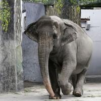 Elephant kills keeper and runs into the jungle with three tourists