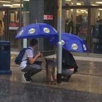 Two kind strangers came to the aid of a dog left out in the pouring rain
