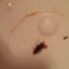 Homeless family finds cockroaches in their hotel bathroom