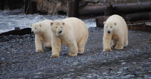 Hungry polar bears trap researchers in weather station