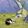 9 wreck-the-heads you are guaranteed to meet at Electric Picnic