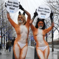 PETA to launch pornography website