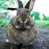Hero rabbit saves family's life - but dies afterwards