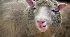 Remember Dolly? There may not be another as EU steps closer to full cloning ban