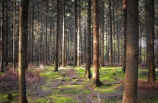 Living wild: Germany's 'forest boy' joins long list of mysterious survival tales