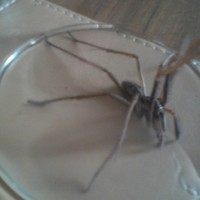 11 truly horrifying spiders found in Irish homes this year