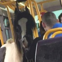 Someone brought a horse on the Luas today