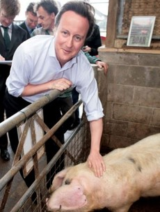 Here's what David Cameron has to say about claims he got too close to a pig