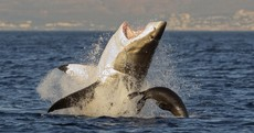 After a string of 'unprecedented' attacks, Australia is getting tough with sharks