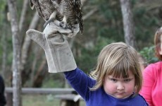 This little girl holding an owl has become an unstoppable meme