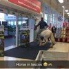 This lad went shopping on a horse in Tesco Ballinasloe