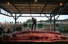 """I could try some ... maybe"": Tokyo tries to reel in tourists with whale meat festival"