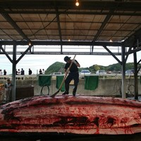 """""""I could try some ... maybe"""": Tokyo tries to reel in tourists with whale meat festival"""