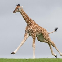 In photos: Can you think of a suitable Irish name for this baby giraffe?