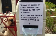This dog wouldn't stop barking at people, so his owner came up with a genius plan