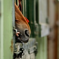 Ballydoyle riders escape suspension for laying horses