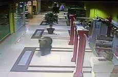 Watch: Wild bear goes on rampage in Russian shopping centre
