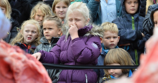Danish zoo criticised for dissecting a lion in front of a crowd of children