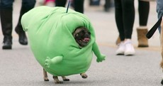 Can you make it through these pet costumes without squealing?