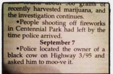 13 of the most hilariously mundane police reports ever