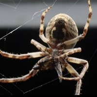 Ten thousand spiders have have set up webbed camp on a bridge in Ohio