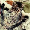 A tiny kitten whose tail was skinned off has made a miraculous recovery and has a new home
