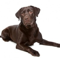A dog named Trigger accidentally shot his owner