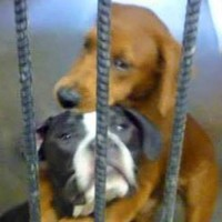 Remember these hugging dogs? They finally have a new home