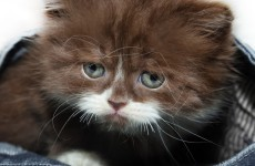Youths in Ballymun attempt to set fire to four kittens