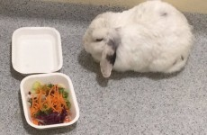 UPDATE: Gardaí in Galway took in a lost rabbit, and bought it some salad