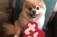 People are dressing their pets up as real life Beanie Babies and it's adorable