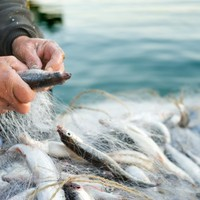 Fisherman says the state confiscated his fish, then sold it themselves