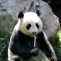 What do pandas, coffee and your brain have in common?