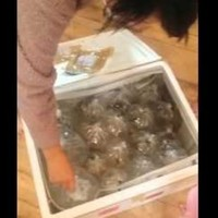 This woman ordered a table from eBay, but got 40 bags of fish instead