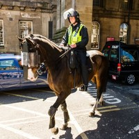 Hi-ho silver lining as horse punched by Newcastle fan earns promotion