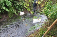 Bag of dead puppies found dumped in Meath stream