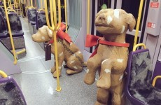 There are dogs all over Dublin today for a heartbreaking reason