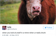 15 hilarious tweets about drinking that everyone can relate to