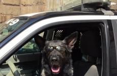 NFL linebacker under investigation... for barking at a police dog
