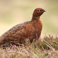 Wealthy hunters are giving thousands of killed birds to food banks in Britain